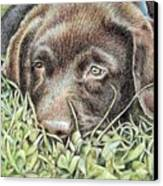Labrador Puppy Canvas Print