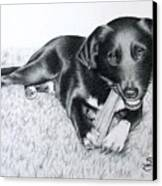 Labrador Samy Canvas Print