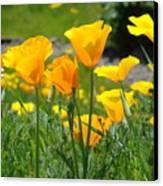 Landscape Poppy Flowers 5 Orange Poppies Hillside Meadow Art Canvas Print