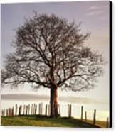 Large Tree Canvas Print by Jon Baxter
