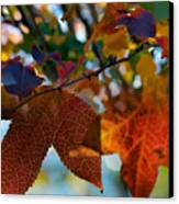 Late Autumn Colors Canvas Print by Stephen Anderson