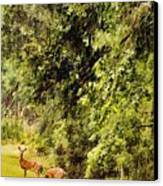 Late Summer Deer Canvas Print