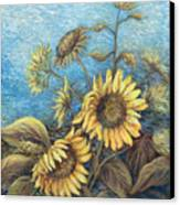 Late Sunflowers  Canvas Print