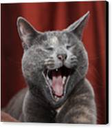 Laughing Kitty Canvas Print