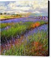 Lavender Field Canvas Print by David Stribbling