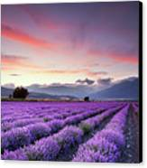 Lavender Field Canvas Print by Evgeni Dinev Photography