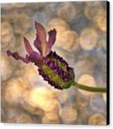 Lavender Canvas Print by Rod Sterling