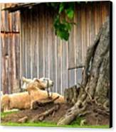 Lawnmowers At Rest Canvas Print