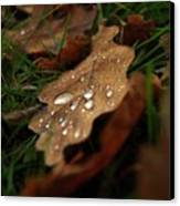 Leaf In Autumn. Canvas Print