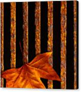 Leaf In Drain Canvas Print by Carlos Caetano