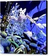 Leafy Sea Dragon Canvas Print by Kelly Mills