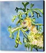 Leafy Sea Dragon Canvas Print by Tanya L Haynes - Printscapes