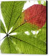 Leaves. Canvas Print