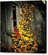 Leaves On An Old Barn Canvas Print by Joyce Kimble Smith