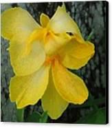Lemon Yellow Canvas Print