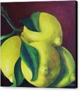Lemons Canvas Print by Dana Redfern