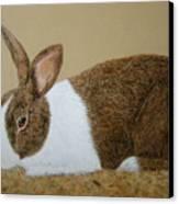 Les's Rabbit Canvas Print