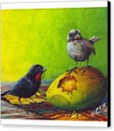 Lesser Antillean Bullfinches And Mango Canvas Print by Christopher Cox