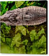 Let Sleeping Gators Lie Canvas Print