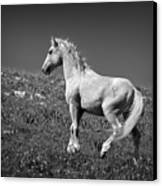 Light Mustang 1 Bw Canvas Print by Roger Snyder