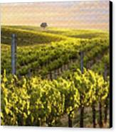Lighted Vineyard Canvas Print by Sharon Foster