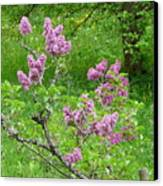 Lilac In The Spring Meadow Canvas Print