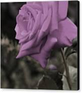 Lilac Rose Canvas Print by Vijay Sharon Govender