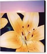 Lilies And Sky 3 Canvas Print