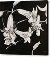 Lilies Black And White Canvas Print by Elizabeth Lane