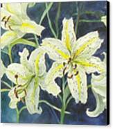 Lilies So White Canvas Print