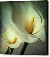 Lillies Canvas Print by Bernard Jaubert