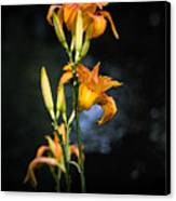 Lily In Monets Garden Canvas Print