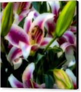 Lily Of The Field Canvas Print