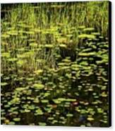 Lily Pad Place Canvas Print