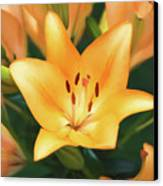 Lily Canvas Print by Steven  Michael