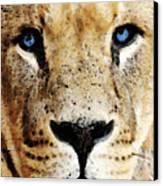 Lion Art - Blue Eyed King Canvas Print by Sharon Cummings