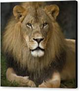Lion In Repose Canvas Print by Warren Sarle