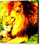 Lion Of Judah Canvas Print