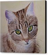 Little Zeke  Stray Cat Series One Canvas Print