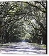 Live Oak Lane In Savannah Canvas Print