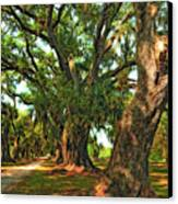Live Oak Lane Canvas Print by Steve Harrington