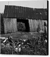 Lloyd-shanks-barn-4 Canvas Print