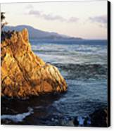 Lone Cypress Tree Canvas Print by Michael Howell - Printscapes