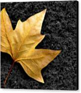 Lone Leaf Canvas Print by Carlos Caetano