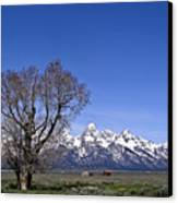 Lone Tree At Tetons Canvas Print