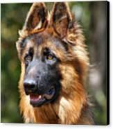 Long Coated German Shepherd Dog Canvas Print by Sandy Keeton