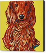 Long Haired Dachshund Canvas Print