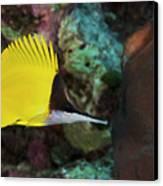 Longnose Butterflyfish Canvas Print by Steve Rosenberg - Printscapes
