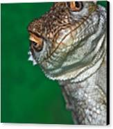 Look Reptile, Lizard Interested By Camera Canvas Print