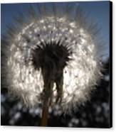 Looking Through A Dandelion Canvas Print by Rebecca Cearley